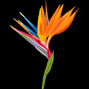 Exotische Tropische Paradiesvogel Blume Strelitzia