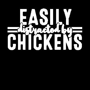 Hühner Züchter Zucht Huhn