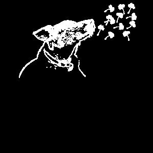 Pusteblume Hunde Löwenzahn schöne Blume