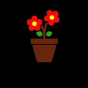 Pflanze Blume Blumentopf Geschenk