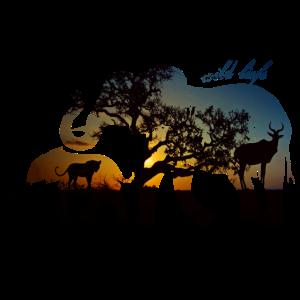 Elefanten Wildlife