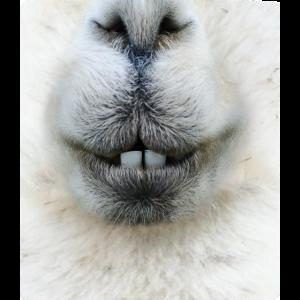 Alpaka2 - optimierte Passform auf der Maske