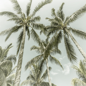 Palmenidylle | Vintage