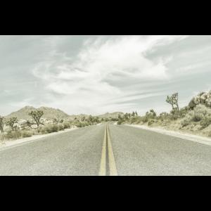 Landstraße mit Joshua Trees