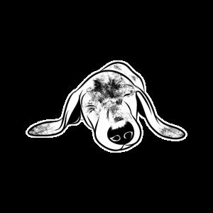 schlafender Dackel niedlicher Hund