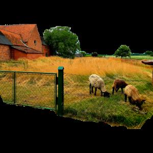 Die Schafe und ihre Weide. Der Bauernhof. Village.