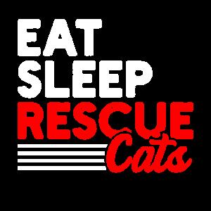 Tierheim Katzen