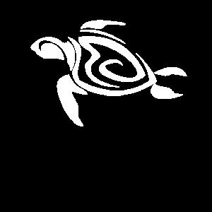Schildkröte Meer Ozean Tauchen Gerätetauchen Apnoe