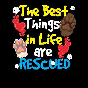 Tierheim, Adoption, Tierrettung, Tierschutz, Hunde