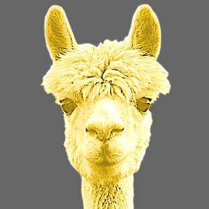 Alpaka Lama Kamel Peru Anden Südamerika Wolle