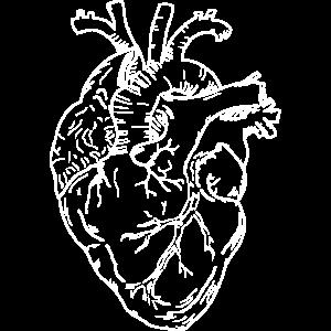 Weißes menschliches Herz