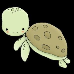 Hello Sea Turtle