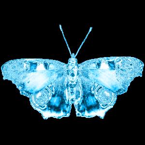 Schmetterling - blau - schmetterlinge - tiere