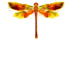 Aquarell Orange Libelle Gelbe Libelle