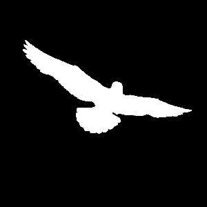 Adler Freiheit