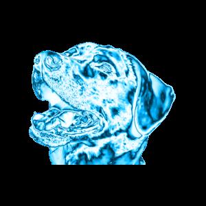 Hund - eis - winter - blau
