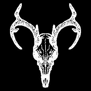 Hirsch, Schädel, Deer, Skull, Geweih