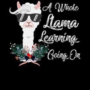 Ein ganzes Lama-Lerngeschenk / Exkursionsgeschenk