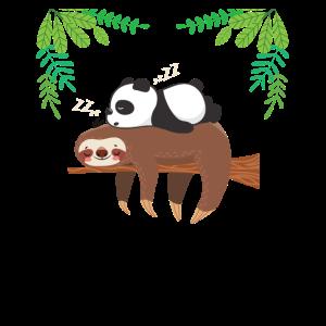 Faultier Panda Langschläfer