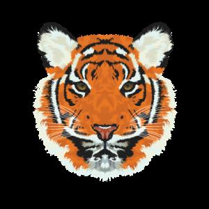 Tigergesicht sibirischer Tiger Raubkatze