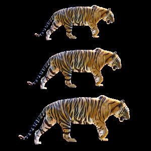 Tiger Raubtiere Wildkatzen Geschenk