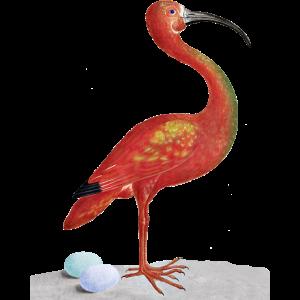 Surreal Flamingo