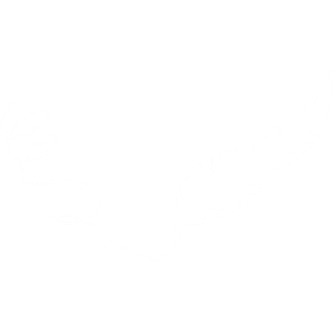 Die weiße Feder
