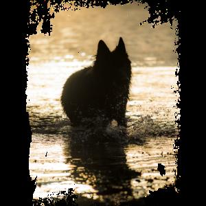 Schwarzer deutscher Schäferhund Silhouette Foto