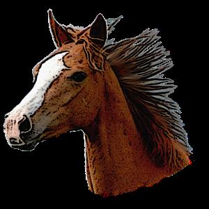 Braunes Pferd, Pferd Kopf