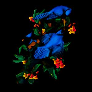 Vintage BlueJays Birdwatcher Bird Illustration De