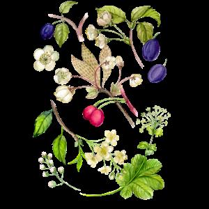 Blumen, Botanik, Botanisch, Wasserfarben, Aquarell