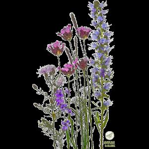 Zarte Wiesenblumen | Nature & Click