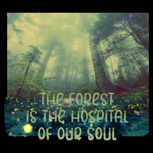 Wald Seele Heilung Natur Baum Bäume grün Lunge