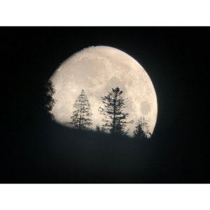 moosartdesign Mond