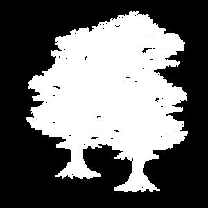 Naturschutz Bäume Wald Natur Ökologie Umwelt