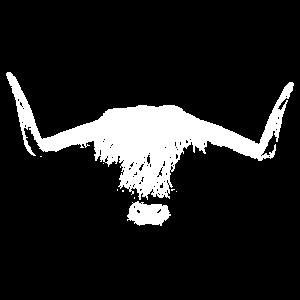 Head of a Highland Cattle Kopf eines Hochlandrinds