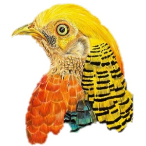 Yellow bird Amazon