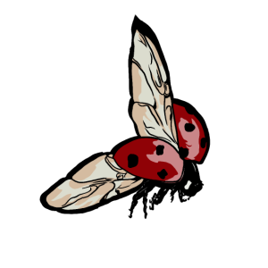 Marienkäfer Glücksbringer Geschenk für Insekten