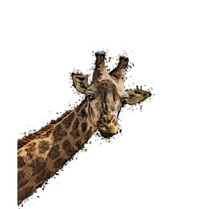 Giraffenkopf gemalter Kopf einer Giraffe