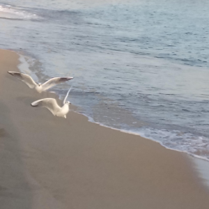 Vögel im Flugplakat