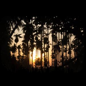 Palmen Silhouetten im Sonnenuntergang