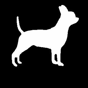 Hund Chihuahua Terrier Dackel Retriever Beagle