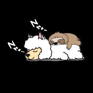 Lustiges Faultier schläft auf Alpaka Lama Alpaca