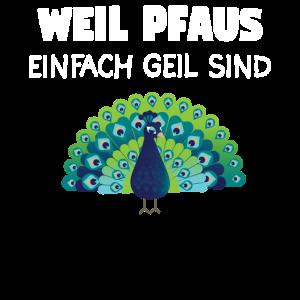 Pfau Pfaus Pfaufeder Tier Vogel Geschenk