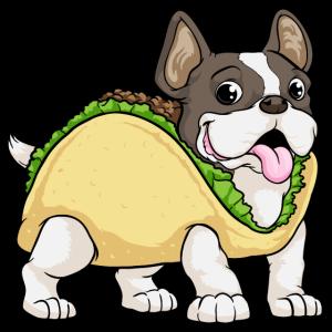 Hund mit Taco mit Salat und Hackfleisch