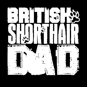 Britisch Kurzhaar Britisch Kurzhaar Papa