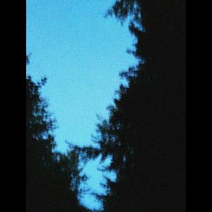 Von den Bäumen in den Himmel