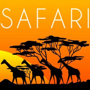 safari mit giraffen,safari,giraffen