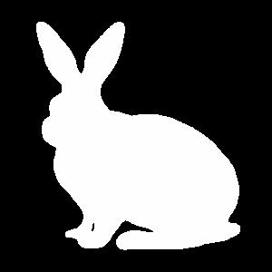 Häschen süßer Hase Osterhase Haustier Ostern Hasen