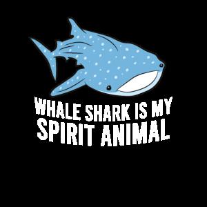 Walhaie Sind meine Lieblingstiere